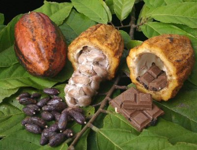 CacaoToChocolate.jpg