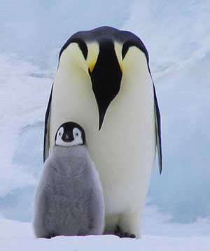 art_Penguins_emperor_and_chick.jpg
